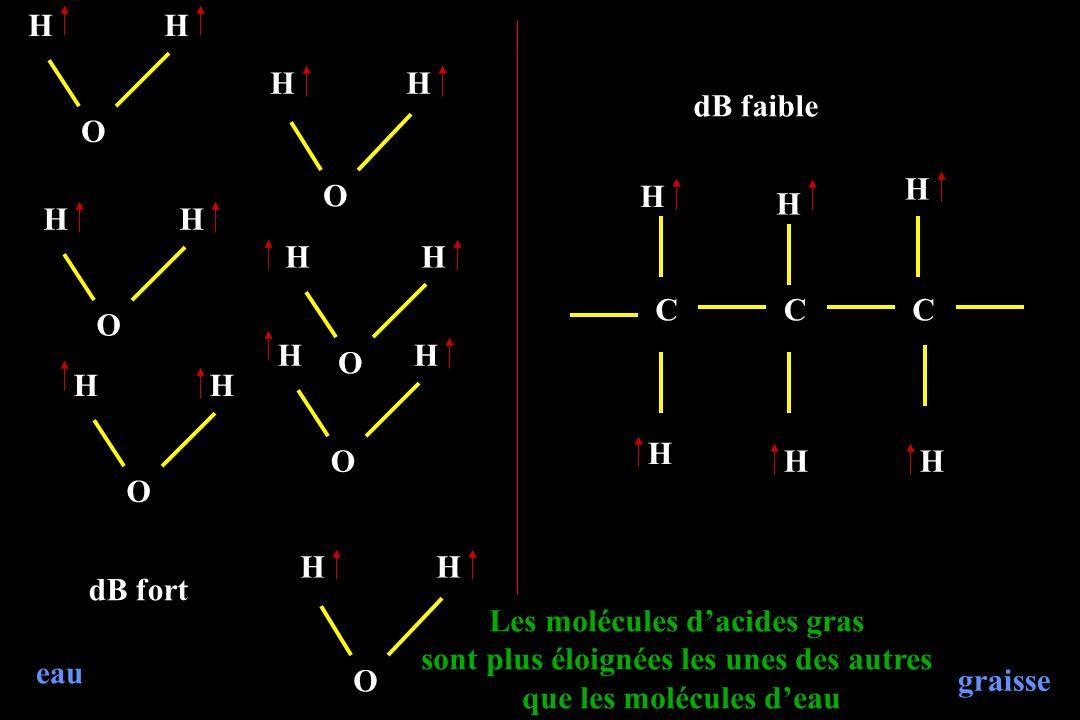 Les molécules d'acides gras sont plus éloignées les unes des autres