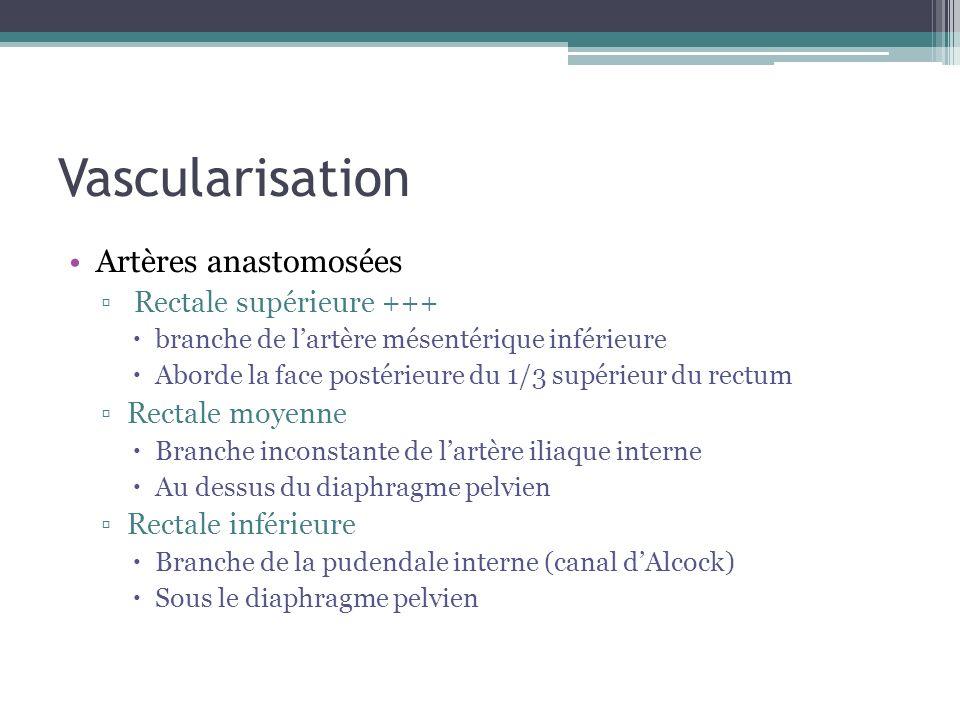 Vascularisation Artères anastomosées Rectale supérieure +++