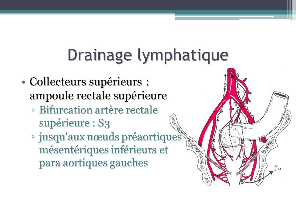 Drainage lymphatiqueCollecteurs supérieurs : ampoule rectale supérieure. Bifurcation artère rectale supérieure : S3.