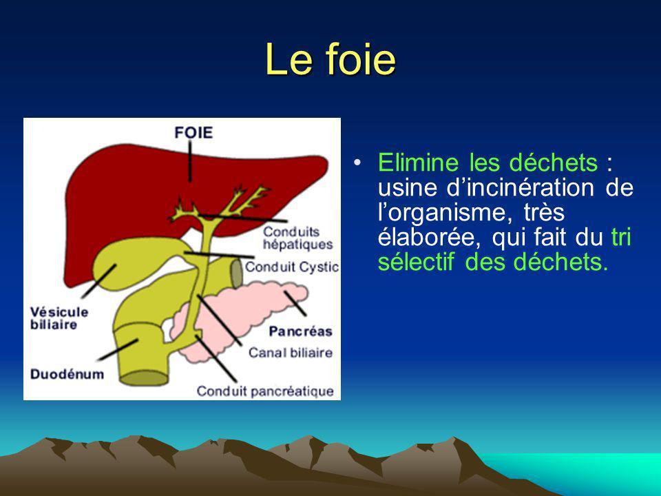 Le foie Elimine les déchets : usine d'incinération de l'organisme, très élaborée, qui fait du tri sélectif des déchets.