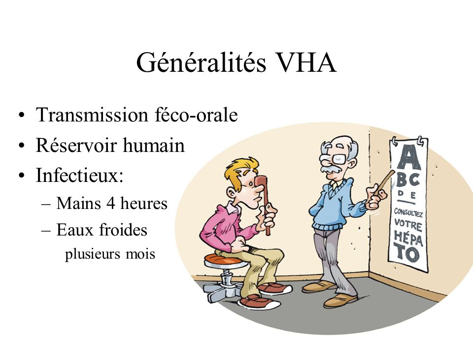 Généralités VHA Transmission féco-orale Réservoir humain Infectieux: