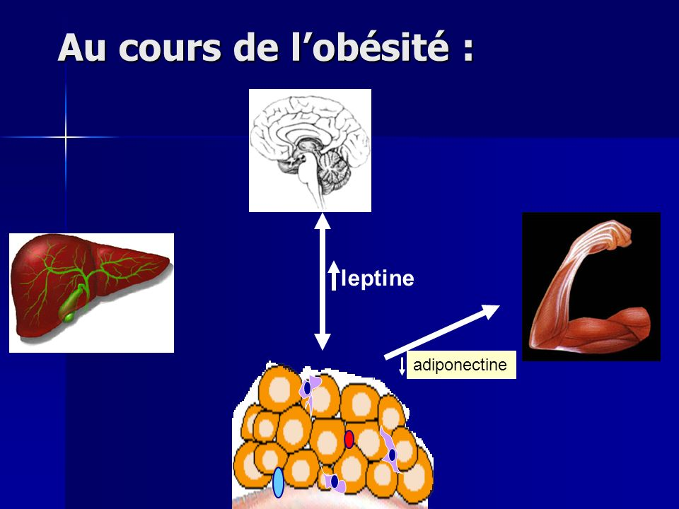 Au cours de l'obésité : leptine adiponectine