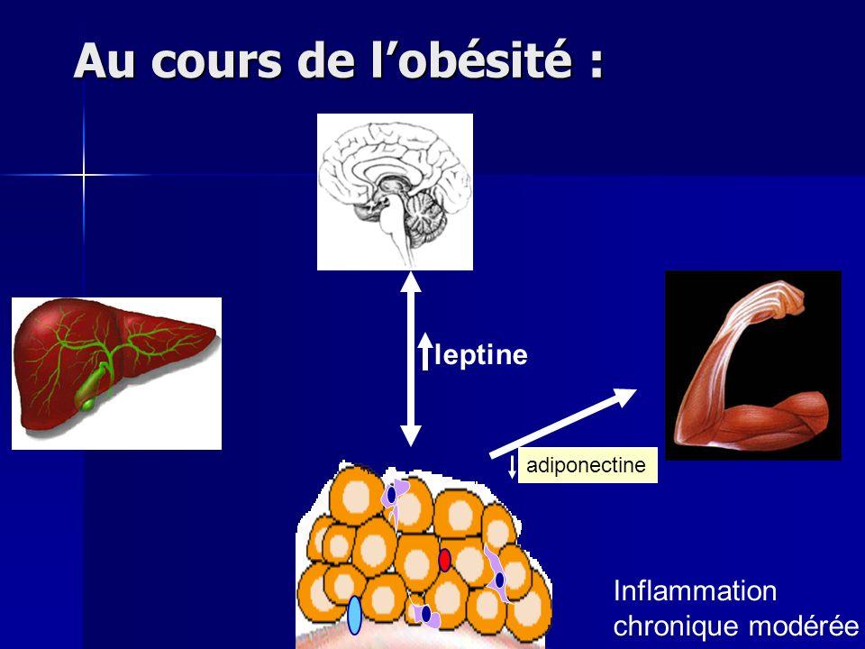 Au cours de l'obésité : leptine Inflammation chronique modérée