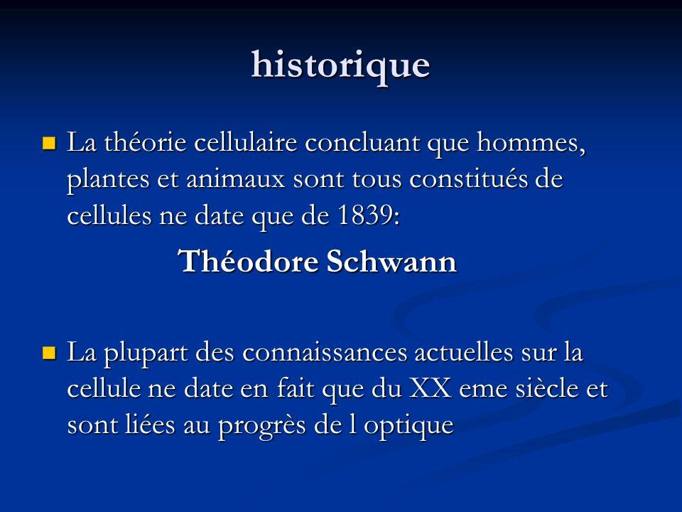 historique La théorie cellulaire concluant que hommes, plantes et animaux sont tous constitués de cellules ne date que de 1839:
