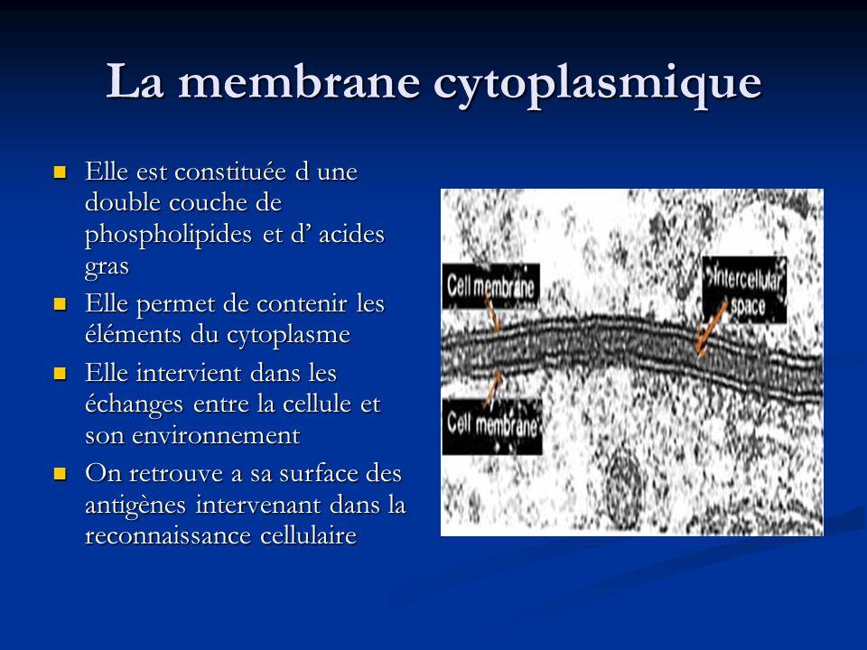 La membrane cytoplasmique
