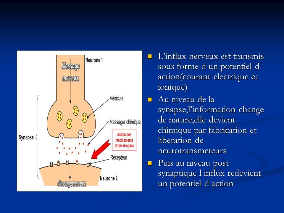 L'influx nerveux est transmis sous forme d un potentiel d action(courant electrique et ionique)