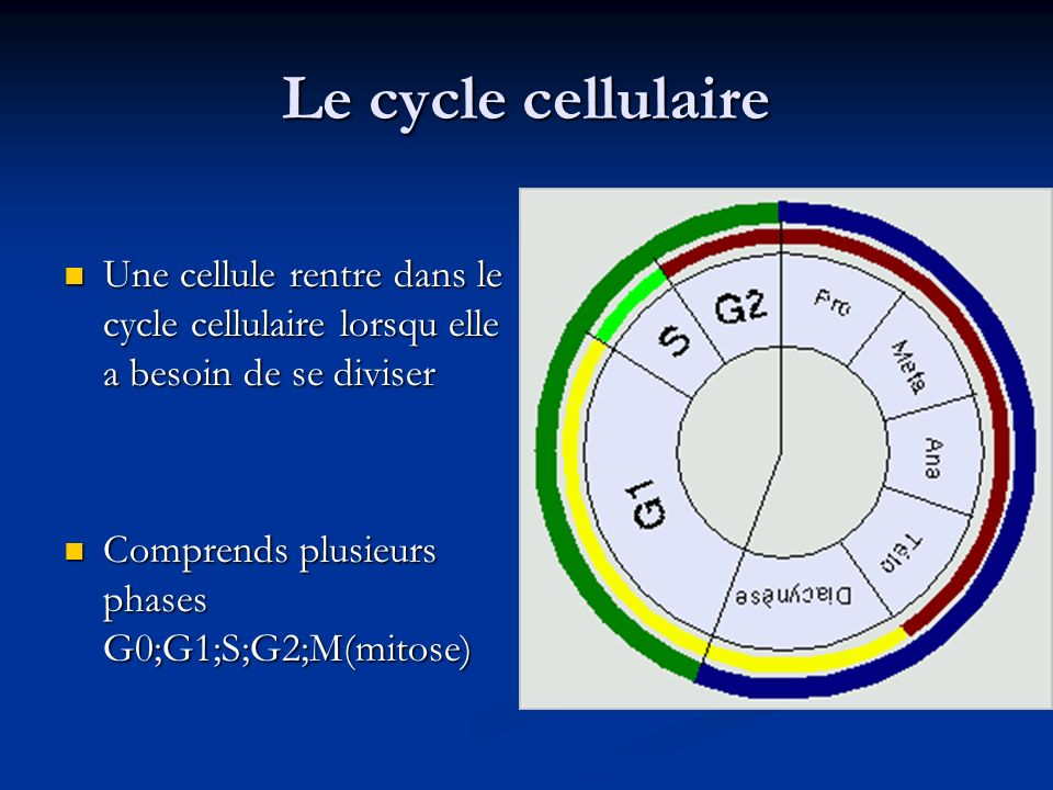 Le cycle cellulaire Une cellule rentre dans le cycle cellulaire lorsqu elle a besoin de se diviser.