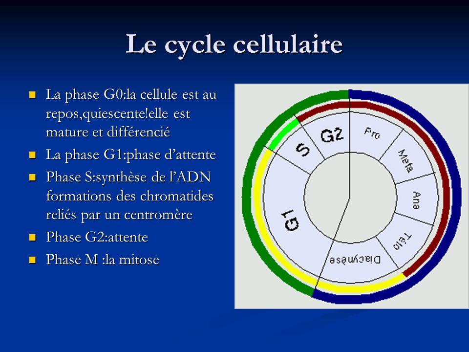 Le cycle cellulaire La phase G0:la cellule est au repos,quiescente!elle est mature et différencié. La phase G1:phase d'attente.