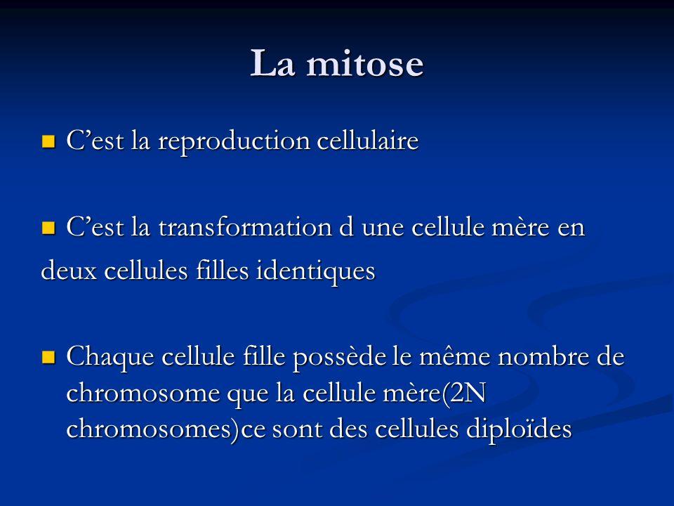 La mitose C'est la reproduction cellulaire