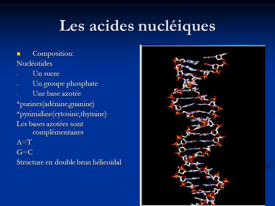 Les acides nucléiques Composition: Nucléotides Un sucre