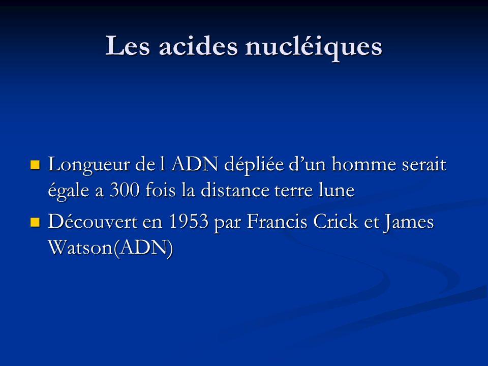 Les acides nucléiques Longueur de l ADN dépliée d'un homme serait égale a 300 fois la distance terre lune.