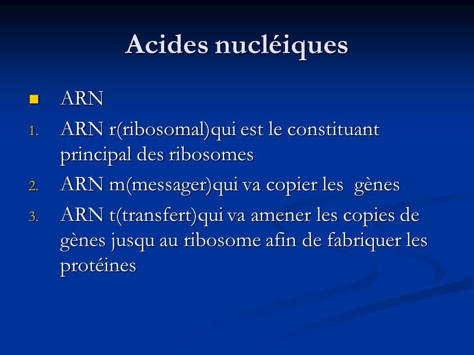 Acides nucléiques ARN. ARN r(ribosomal)qui est le constituant principal des ribosomes. ARN m(messager)qui va copier les gènes.