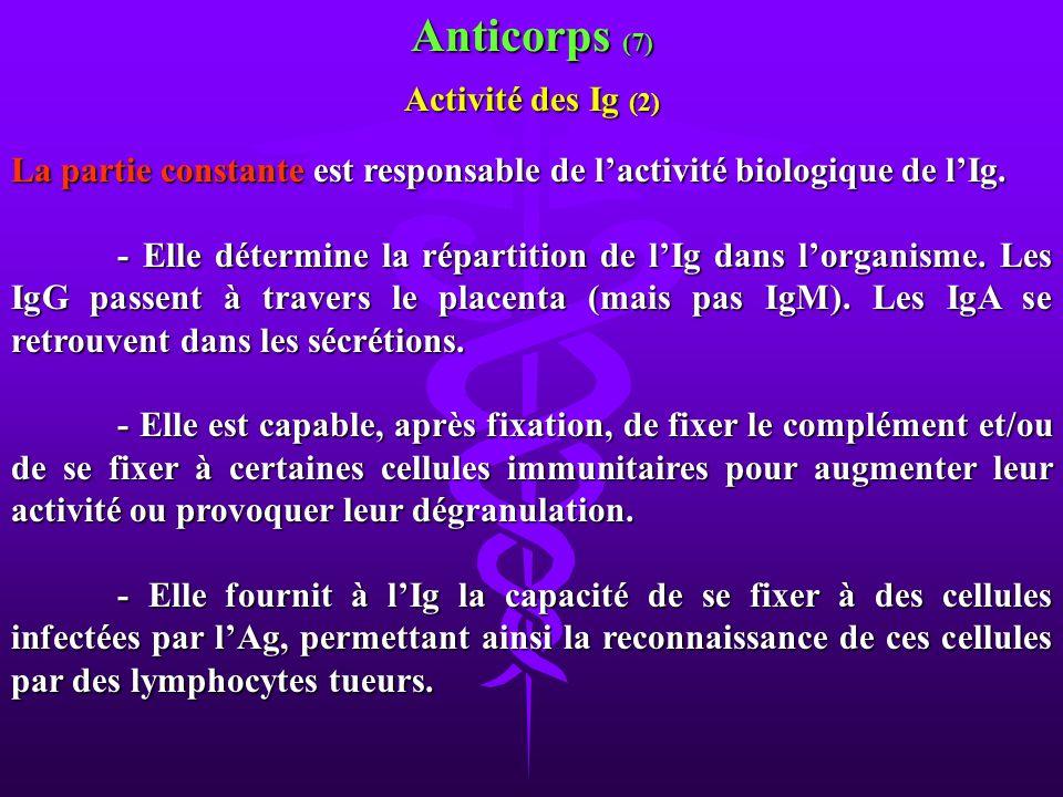 Anticorps (7) Activité des Ig (2)