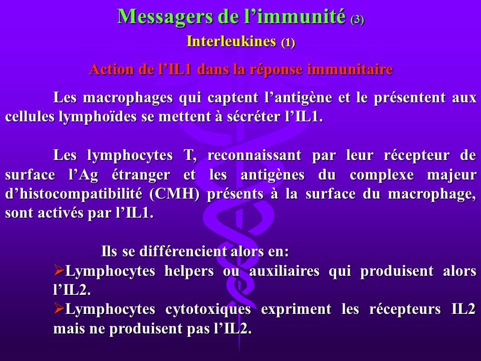 Messagers de l'immunité (3)