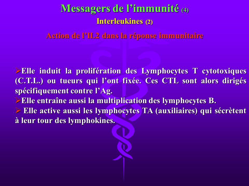 Messagers de l'immunité (4)