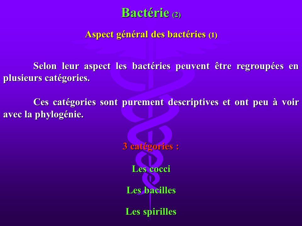 Aspect général des bactéries (1)