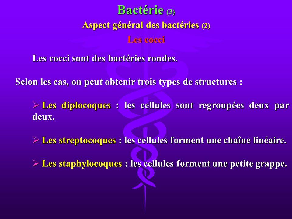Aspect général des bactéries (2)