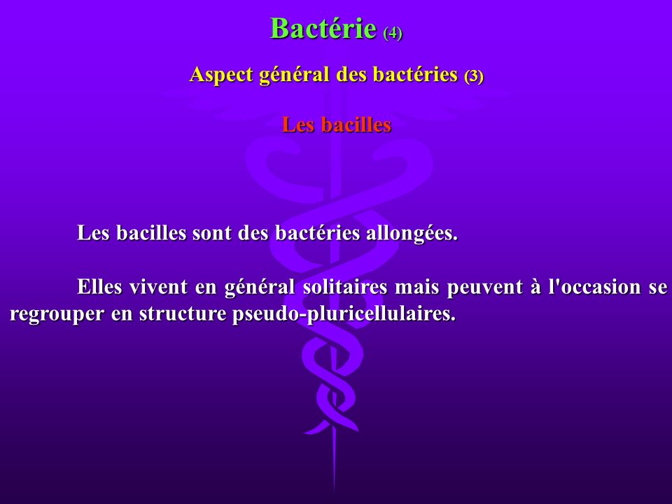 Aspect général des bactéries (3)