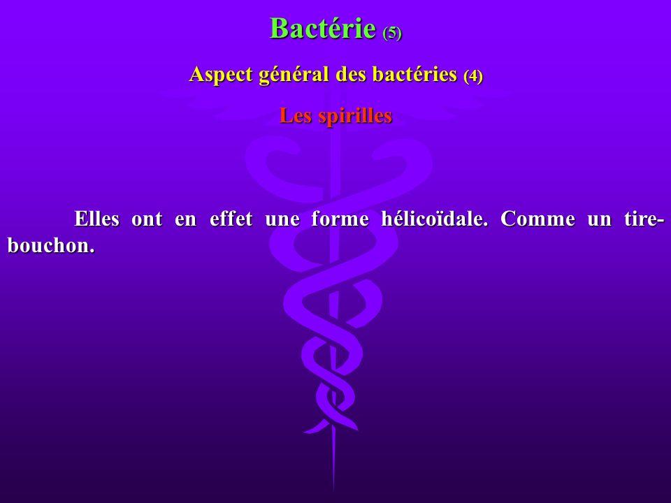 Aspect général des bactéries (4)