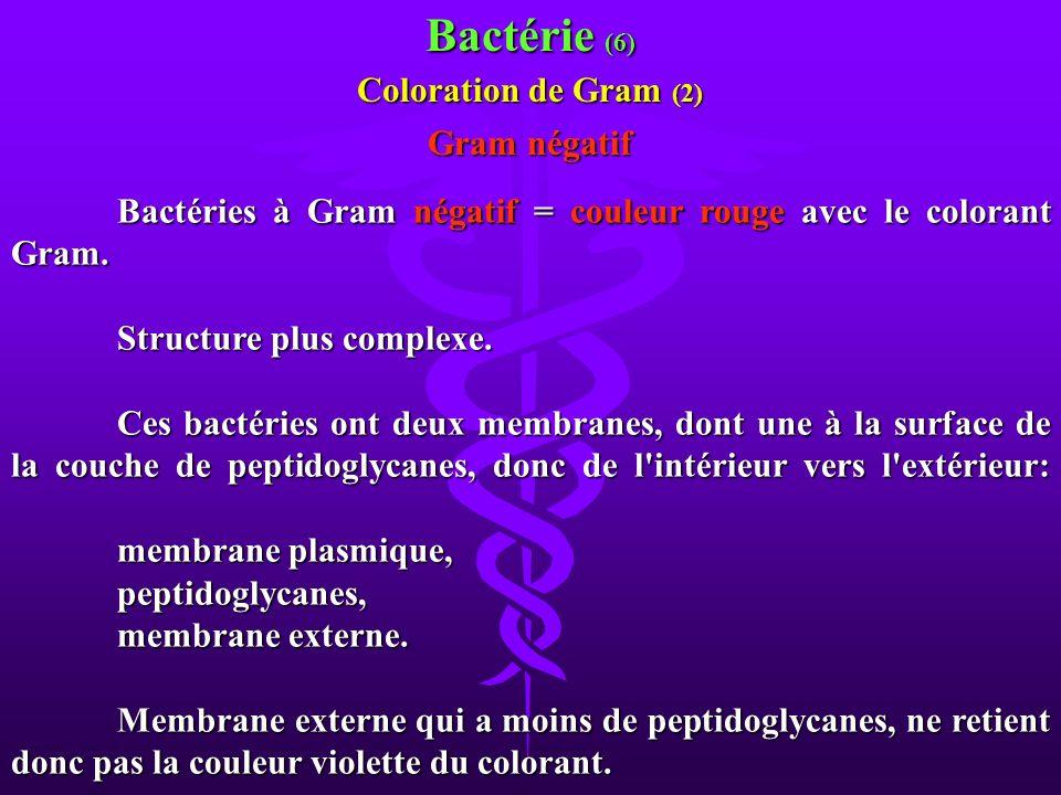 Bactérie (6) Coloration de Gram (2) Gram négatif
