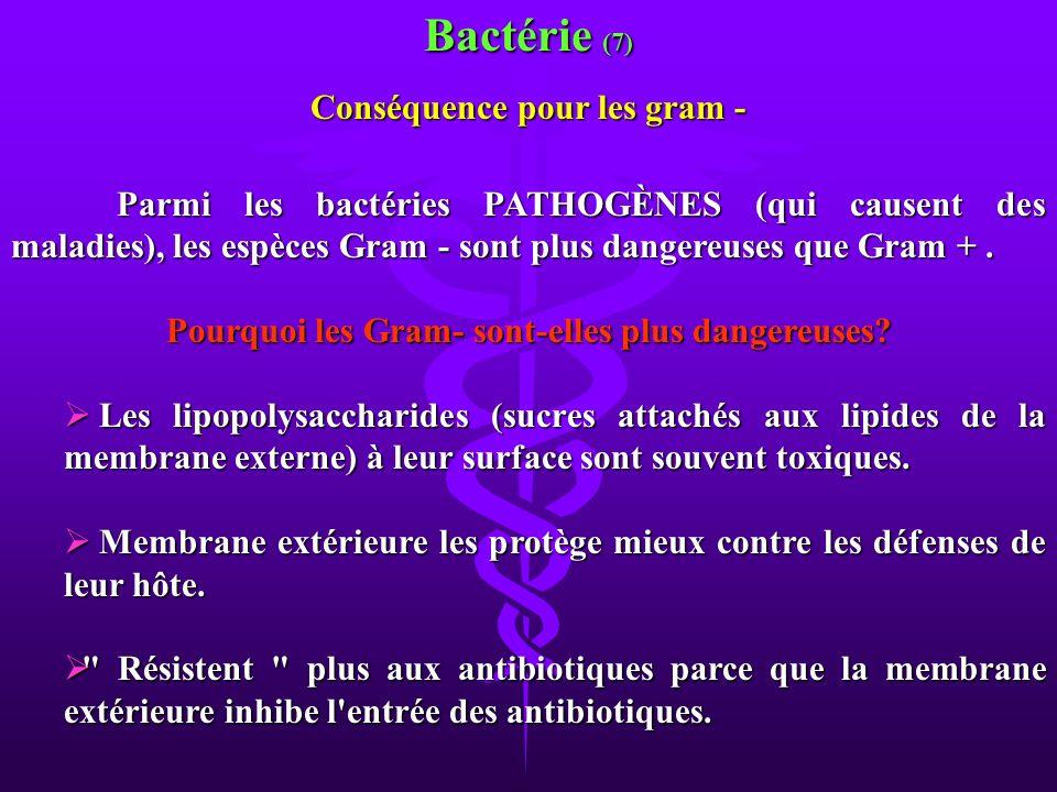 Bactérie (7) Conséquence pour les gram -