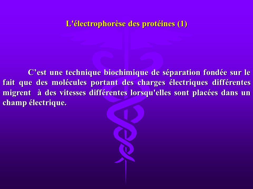 L électrophorèse des protéines (1)