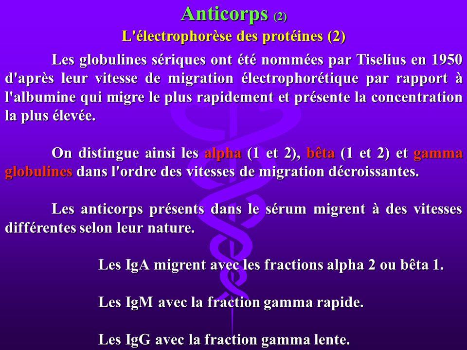 L électrophorèse des protéines (2)