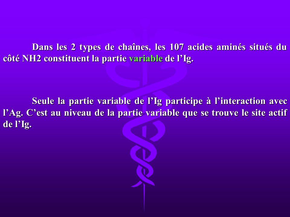 Dans les 2 types de chaînes, les 107 acides aminés situés du côté NH2 constituent la partie variable de l'Ig.