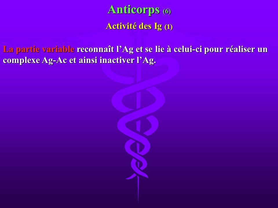 Anticorps (6) Activité des Ig (1)