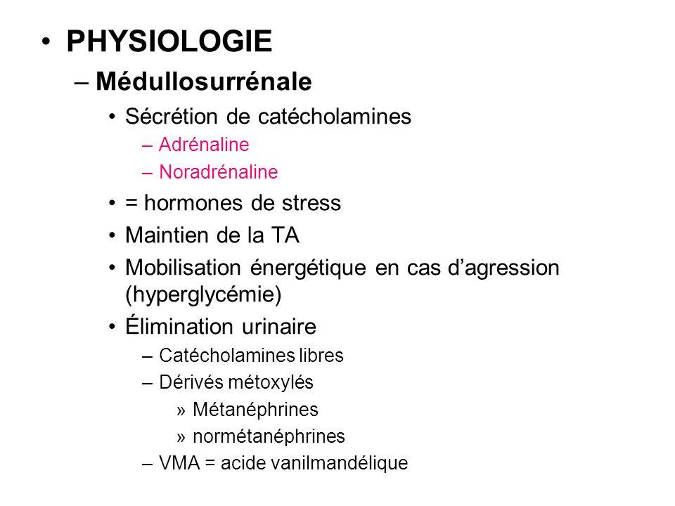 PHYSIOLOGIE Médullosurrénale Sécrétion de catécholamines