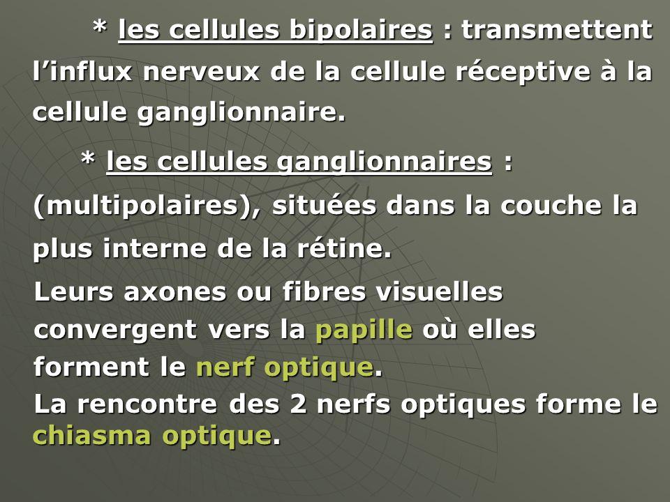 * les cellules bipolaires : transmettent l'influx nerveux de la cellule réceptive à la cellule ganglionnaire.