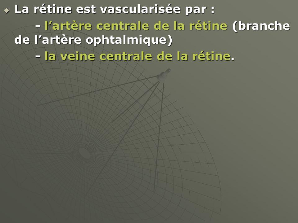 La rétine est vascularisée par :
