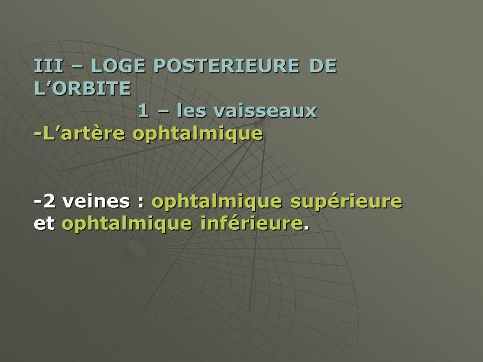 III – LOGE POSTERIEURE DE L'ORBITE