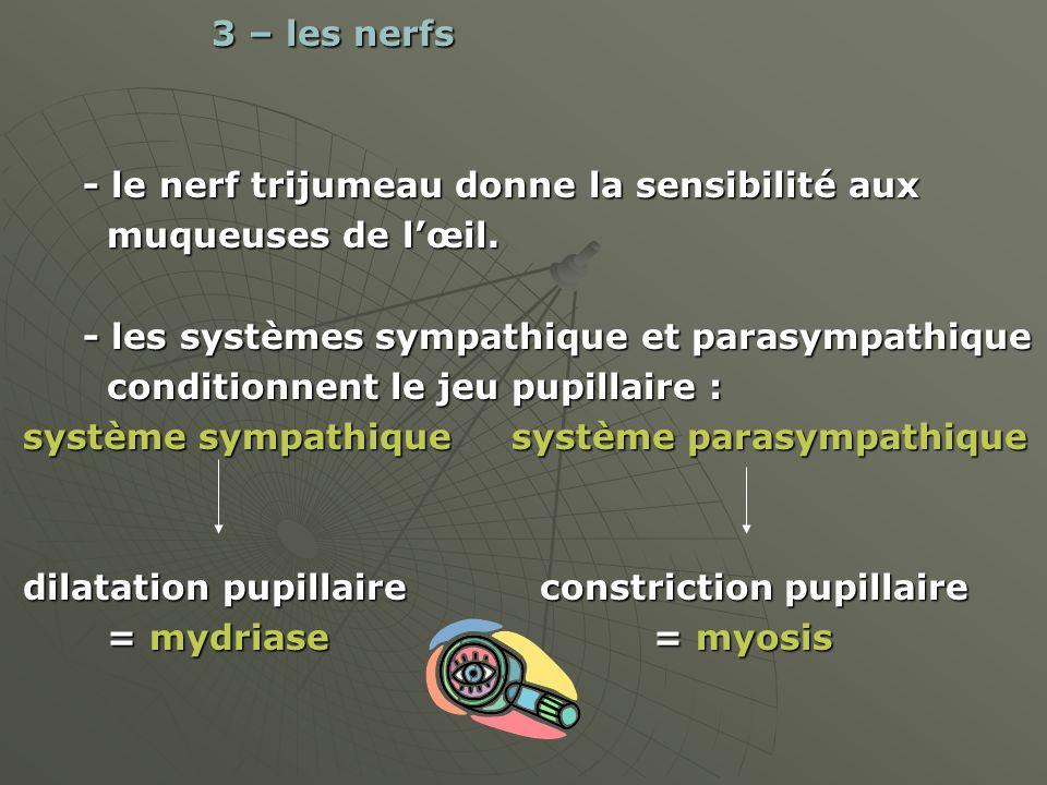 3 – les nerfs - le nerf trijumeau donne la sensibilité aux