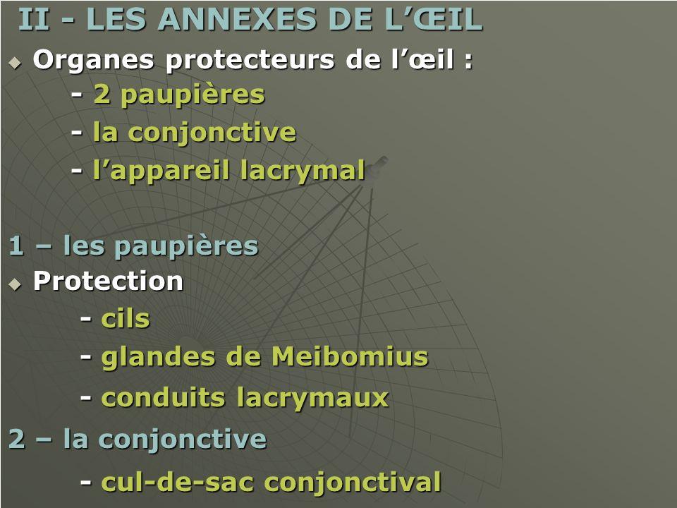 II - LES ANNEXES DE L'ŒIL