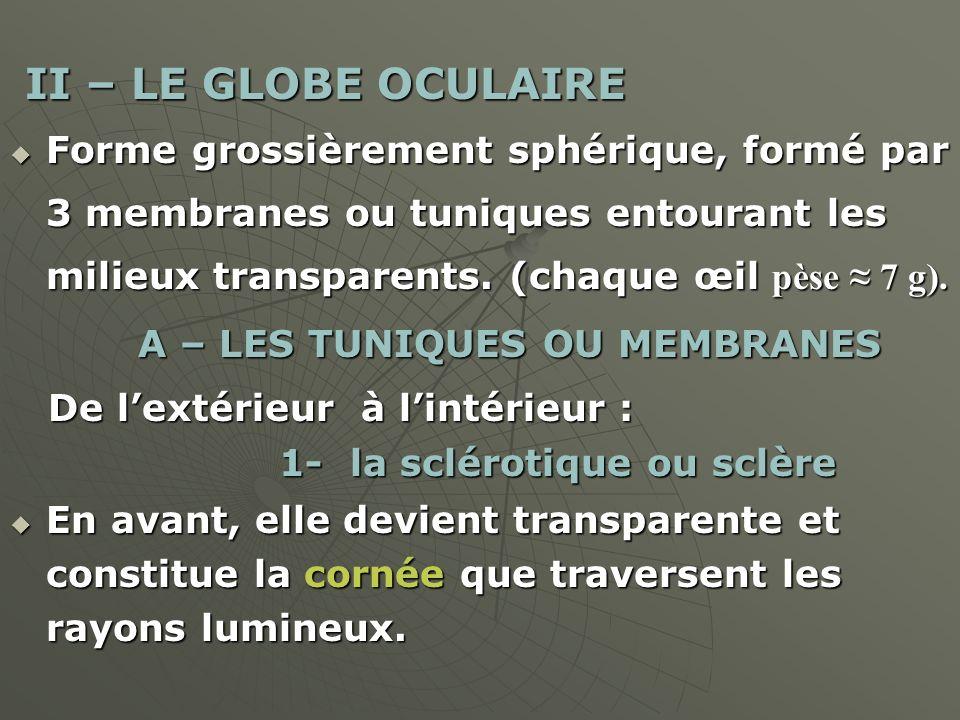 II – LE GLOBE OCULAIRE Forme grossièrement sphérique, formé par 3 membranes ou tuniques entourant les milieux transparents. (chaque œil pèse ≈ 7 g).