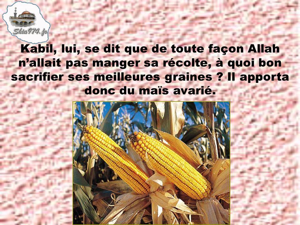 Kabil, lui, se dit que de toute façon Allah n'allait pas manger sa récolte, à quoi bon sacrifier ses meilleures graines .