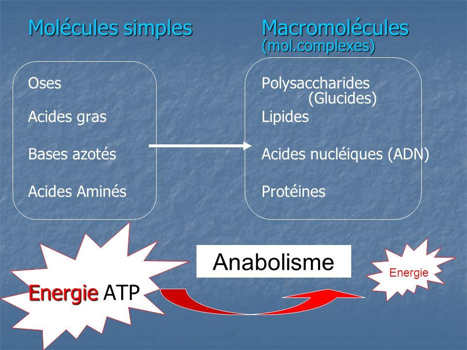 Anabolisme Molécules simples Macromolécules (mol.complexes)