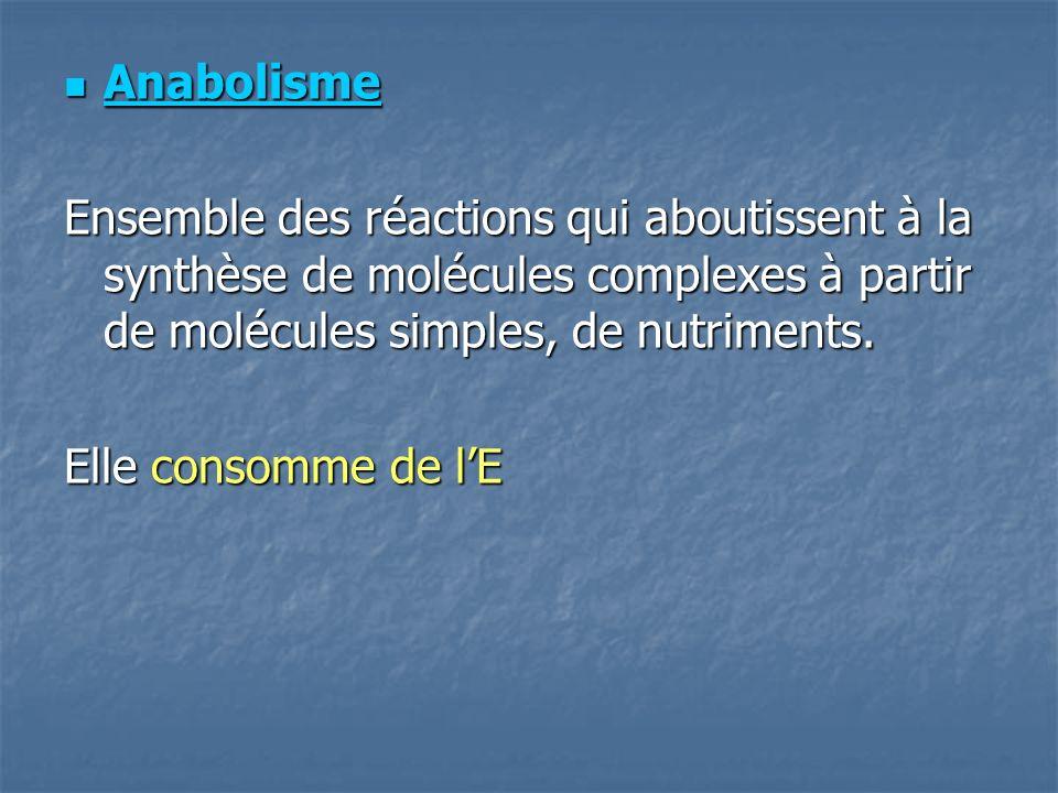 Anabolisme Ensemble des réactions qui aboutissent à la synthèse de molécules complexes à partir de molécules simples, de nutriments.