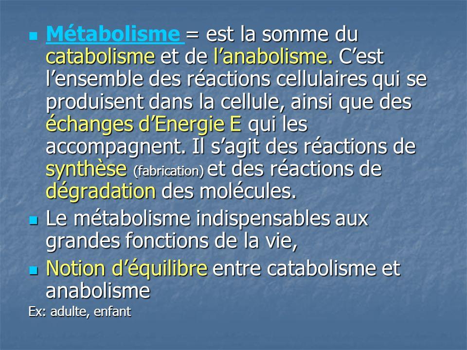 Le métabolisme indispensables aux grandes fonctions de la vie,