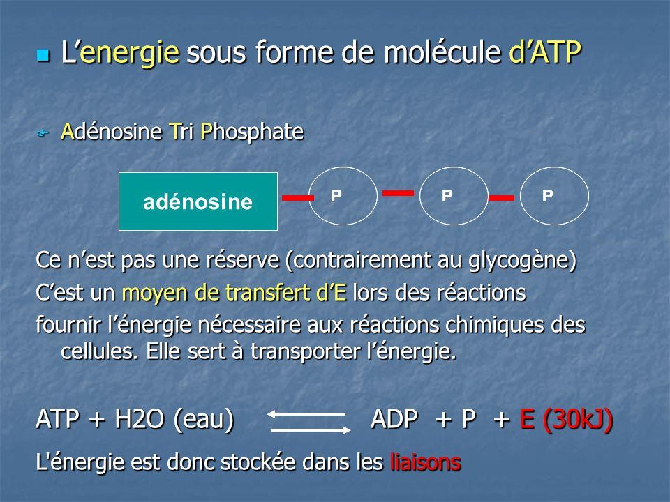 L'energie sous forme de molécule d'ATP