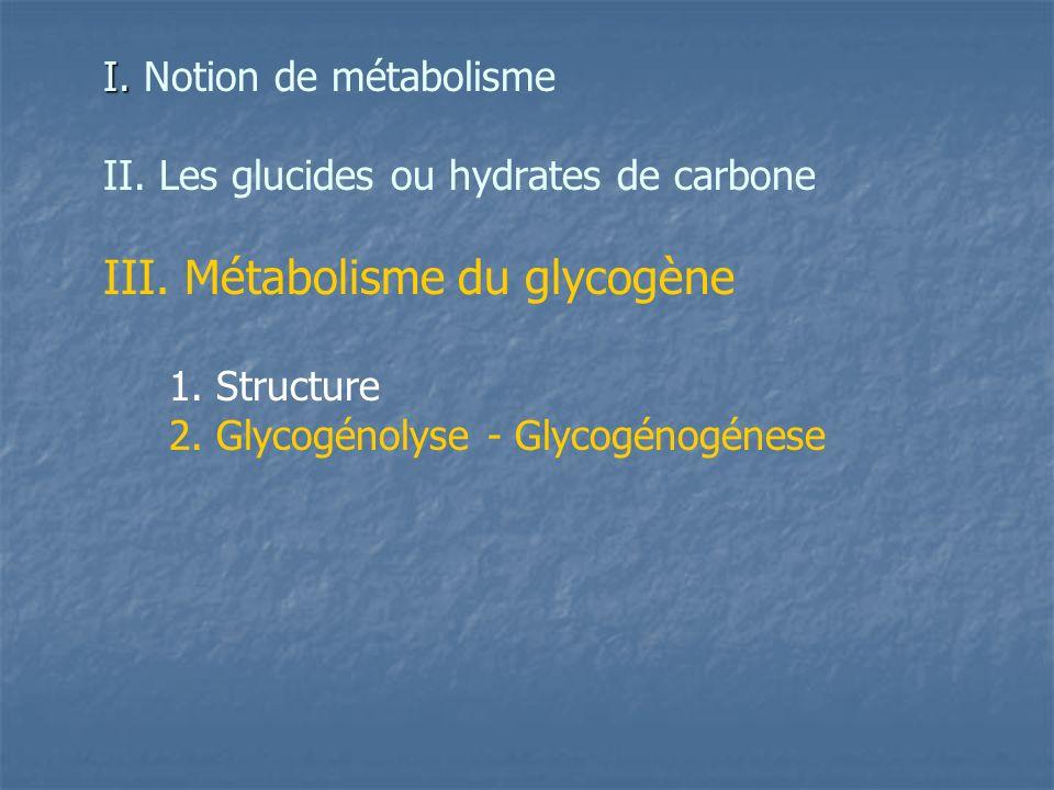 III. Métabolisme du glycogène