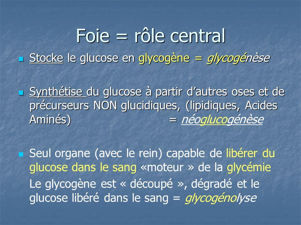 Foie = rôle central Stocke le glucose en glycogène = glycogénèse