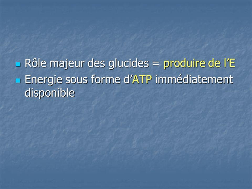 Rôle majeur des glucides = produire de l'E