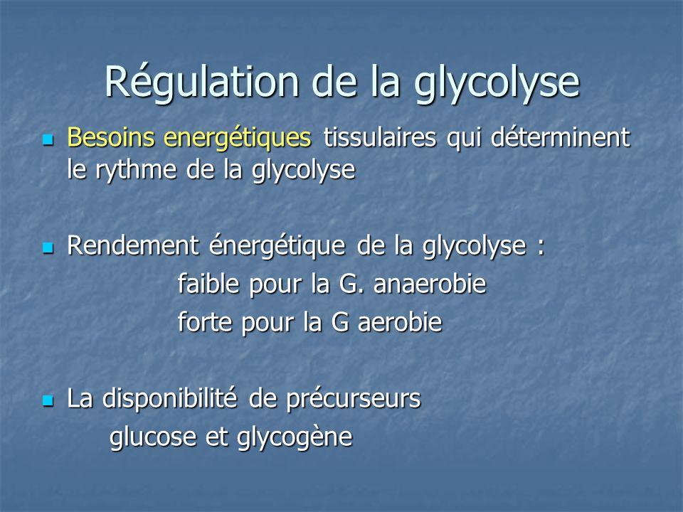 Régulation de la glycolyse