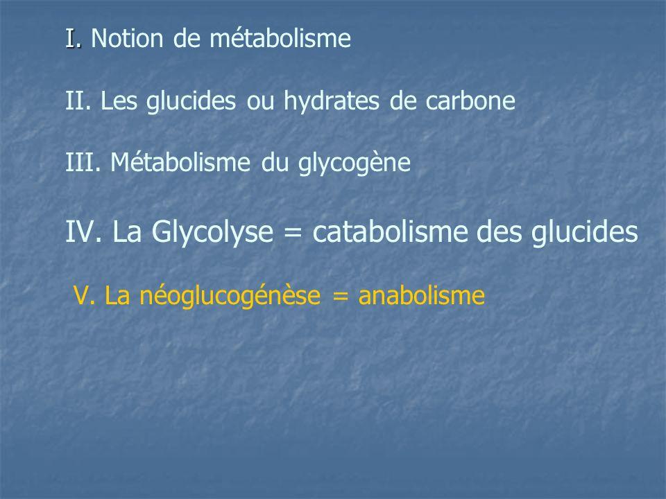 IV. La Glycolyse = catabolisme des glucides