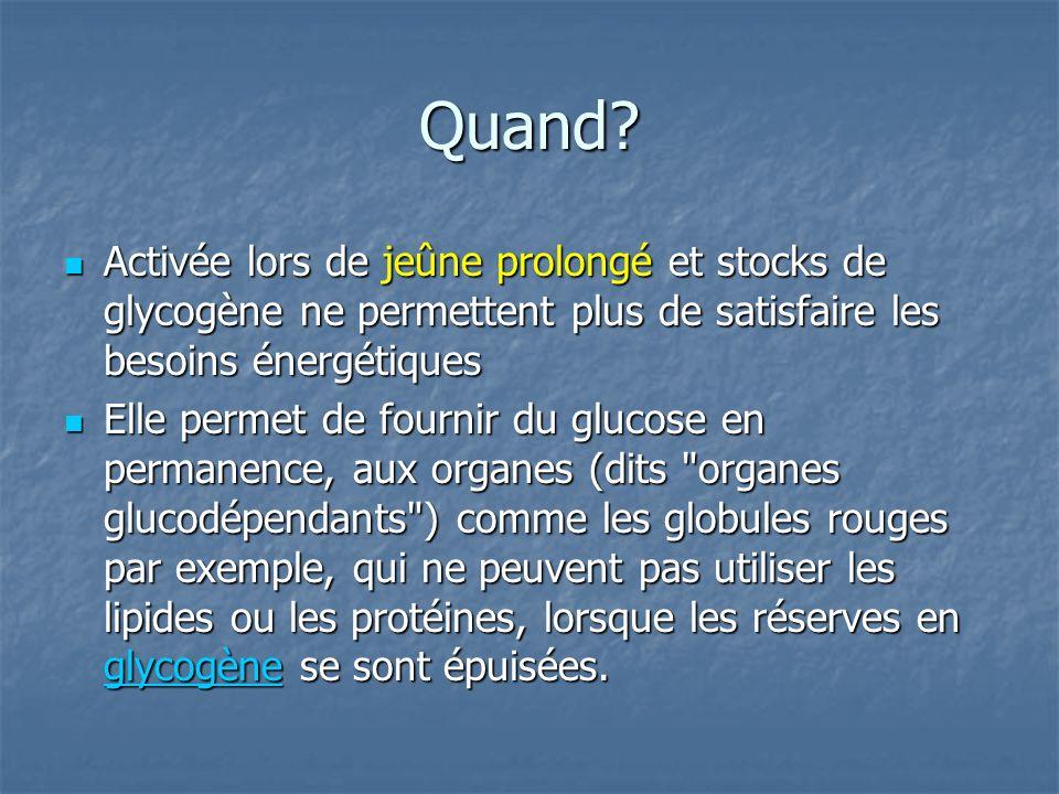 Quand Activée lors de jeûne prolongé et stocks de glycogène ne permettent plus de satisfaire les besoins énergétiques.