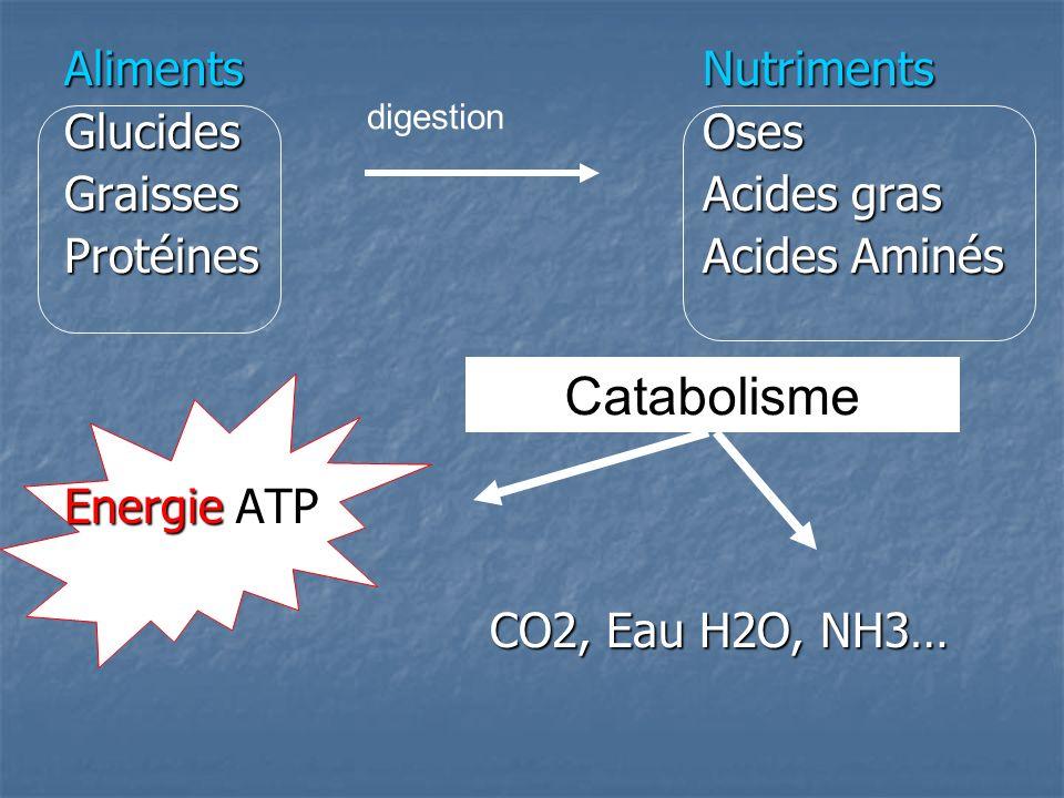 Catabolisme Aliments Nutriments Glucides Oses Graisses Acides gras