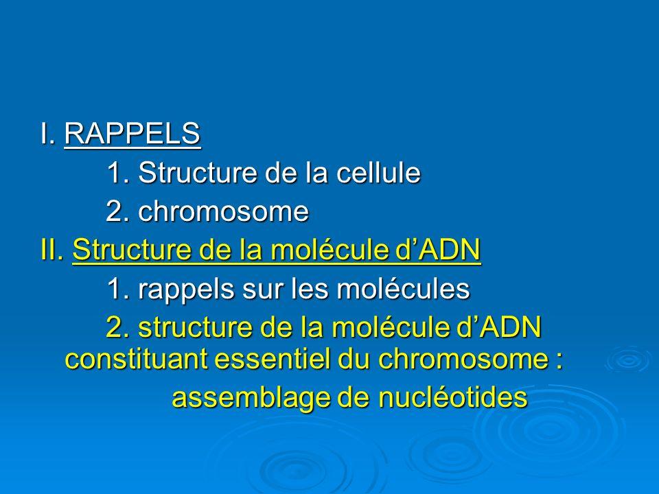 I. RAPPELS 1. Structure de la cellule. 2. chromosome. II. Structure de la molécule d'ADN. 1. rappels sur les molécules.