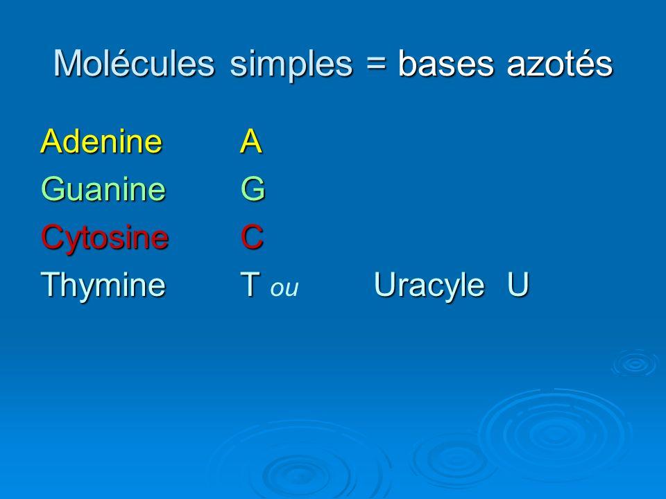 Molécules simples = bases azotés